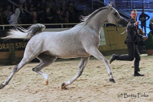 Wadad Zamani (9)
